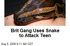 Brit Gang Uses Snake to Attack Teen