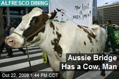 Aussie Bridge Has a Cow, Man
