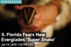 S. Florida Fears New Everglades 'Super Snake'