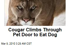 Cougar Climbs Through Pet Door to Eat Dog