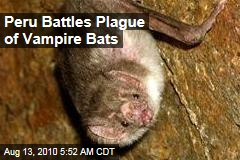 Peru Battles Plague of Vampire Bats