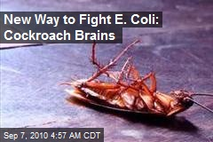 Cockroach Brains Help Fight Superbugs
